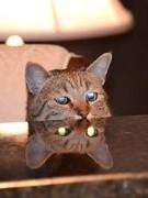 Lũ mèo quỷ ám
