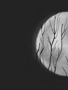 Kí ức trăng thu