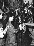 Biểu tượng hoa trong tác phẩm của Hồ Chí Minh