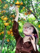 Tiều son điểm xứ Lai Vung