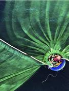 Việt Nam đoạt giải Nhất Cuộc thi ảnh Bảo tồn thiên nhiên thế giới
