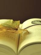 """Văn học - sự đọc và """"cứu rỗi"""""""