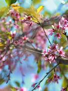 Đà Lạt những mùa hoa