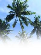 """""""Vụ án ba cây dừa"""""""