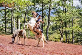 Đua ngựa không yên của người K'ho