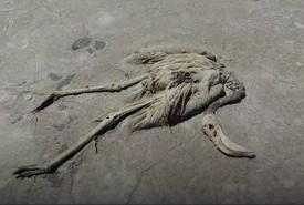 Hồng hạc bị đe dọa