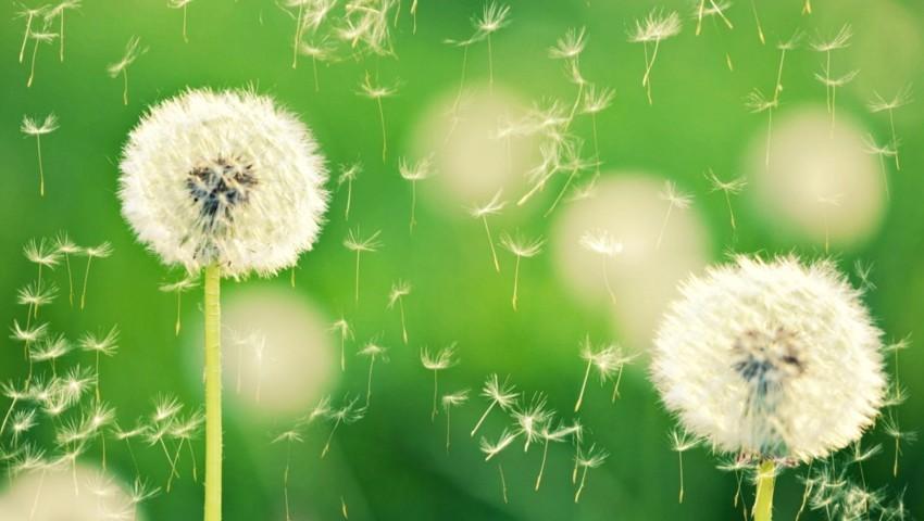nhung hinh anh dep nhat ve hoa bo cong anh bay trong gio 3
