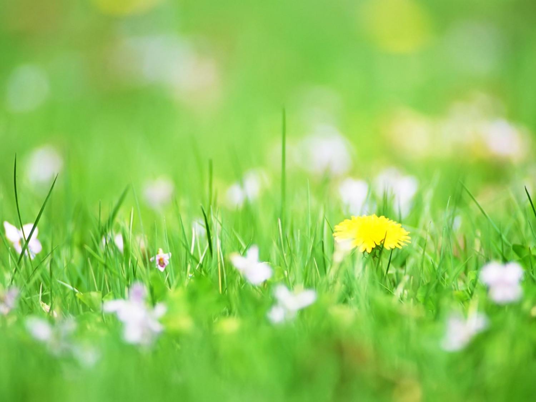 hinh nen hoa co dai dep 1
