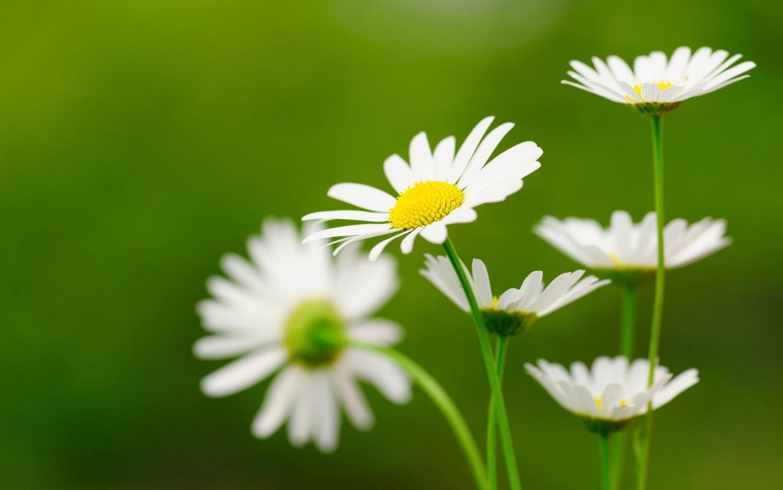 hinh nen hoa cuc dep 3