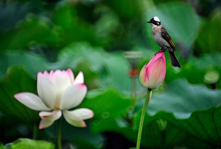 Chùm thơ của tác giả Nguyễn Trọng Luân