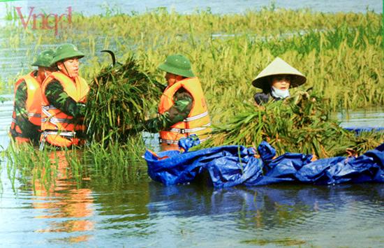 Bộ đội giúp dân gặt lúa chống lũ